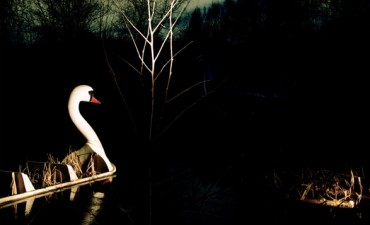 WILD – Animals in Contemporary Photography