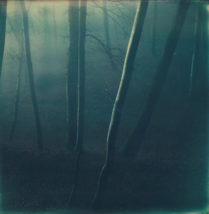 Simon Fröhlich, Wald. Image © Simon Fröhlich. Used here by kind permission from Kehrer Verlag. All right reserved.