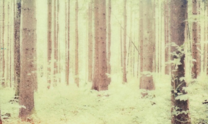 Simon Fröhlich, Wald. Video © Kehrer Verlag. Used here by kind permission from Kehrer Verlag. All right reserved.