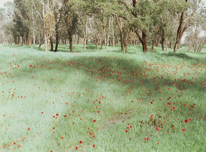 Rafael Y. Herman, somnum rubrum, 2012. Chromogenic print, 180 x 244 cm / 71 x 96 inches. Image courtesy of the artist. Used here by kind permission. All rights reserved.
